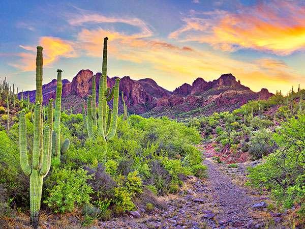 maricopa-desert