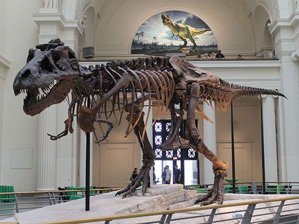 The Chicago Field Museum