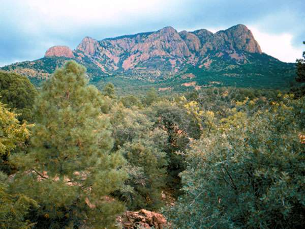 Cibola National Forest